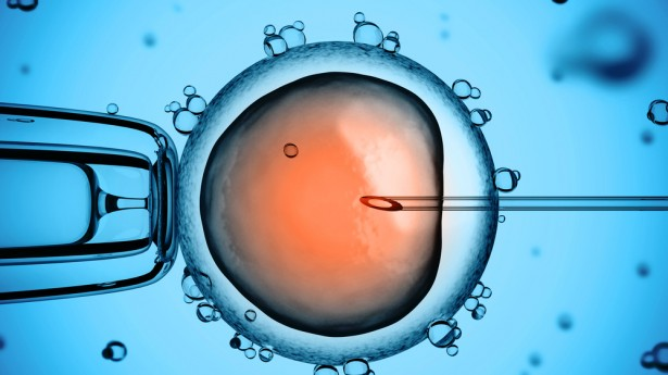 Should I Freeze My Eggs or Embryos?